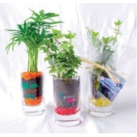 Plantes en verrine avec gravier couleur