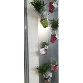 Plantes avec pot aimanté