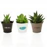 Mini plante